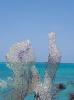 Bonaire & Beach Impressions_17