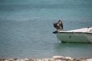 Impressionen Bonaire_3