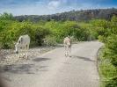 Twizy-Tours Bonaire_3