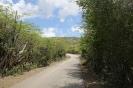 Twizy Tours Roadrunner-Bonaire_7